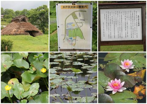 井戸尻史跡公園3