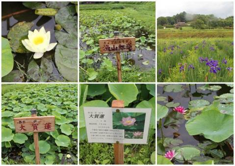 井戸尻史跡公園4