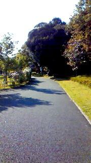 10月16日 散歩道