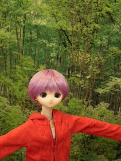 シワのある森林。