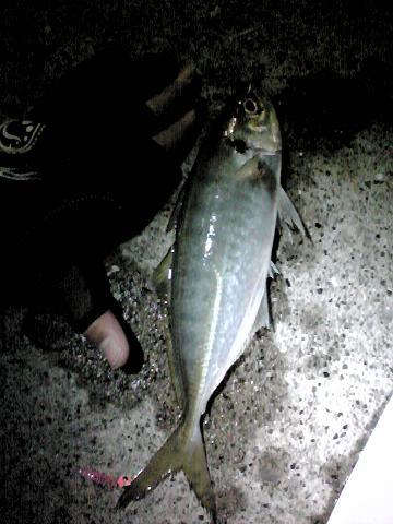 2010_0122_230926AA.jpg
