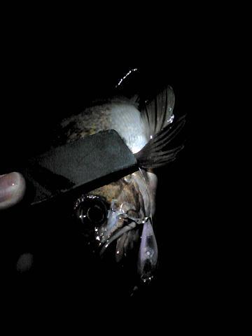 2010_0322_004802AA.jpg