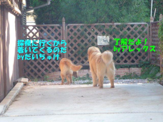 034_20110719012218.jpg