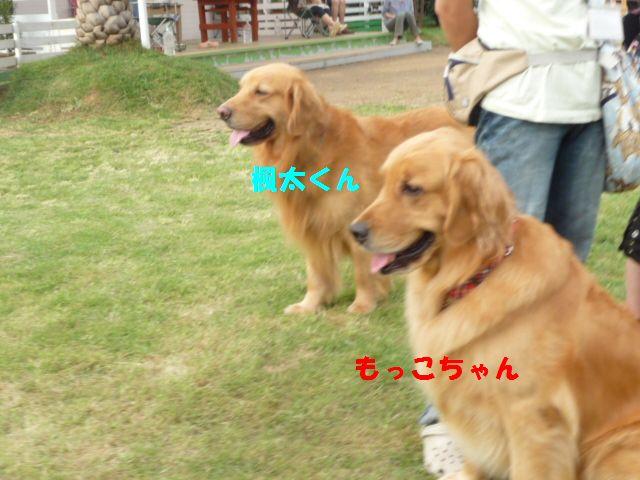 093_20110725172812.jpg