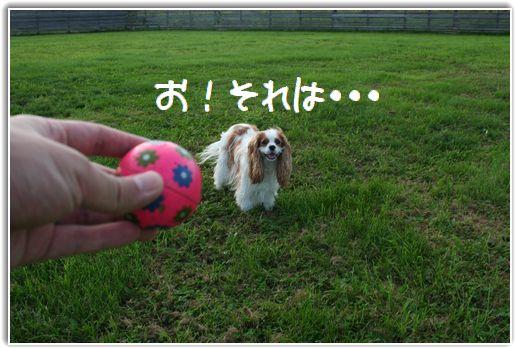 これはボールです