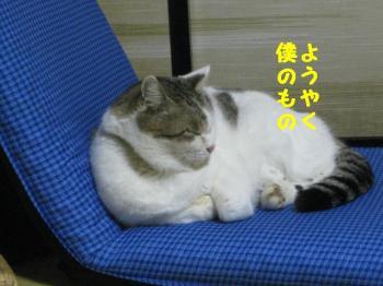wan 29 096