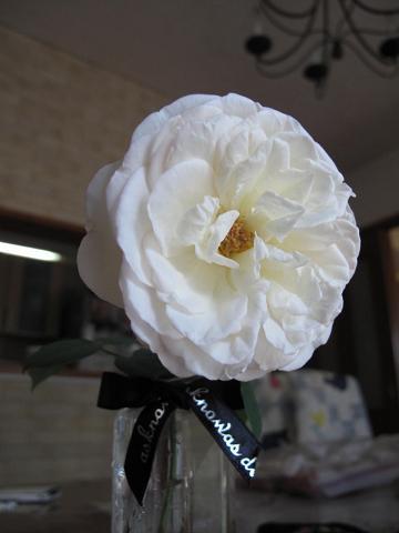 2010 秋の花 006