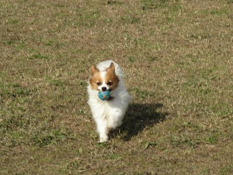 2010 多摩川散歩 014