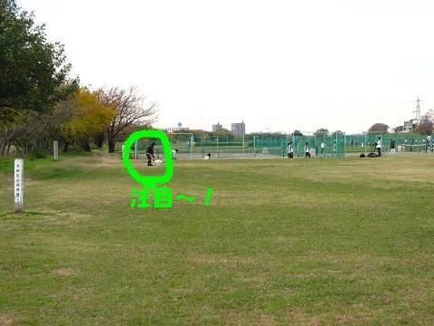 2010 多摩川散歩 041-s