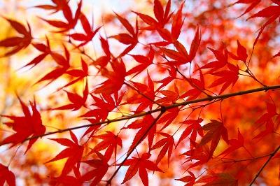 紅葉も色づく・・・
