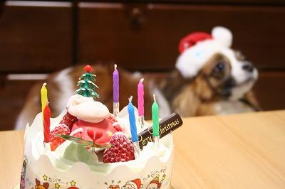 ケーキを狙う ぱぴサンタ!