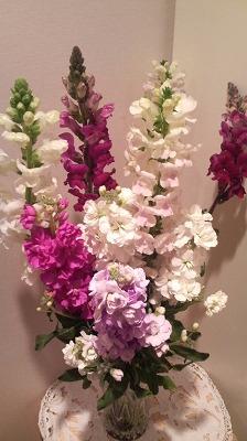 白間津の花