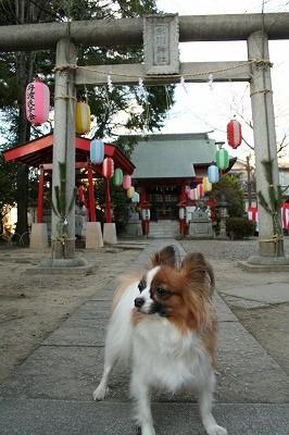 ぱぴの初詣★2010年
