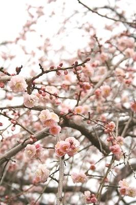 春ももうすぐ・・