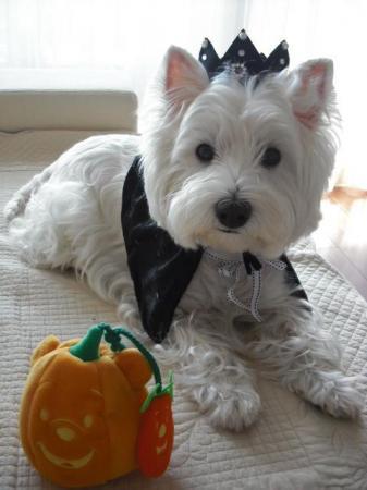 かぼちゃと