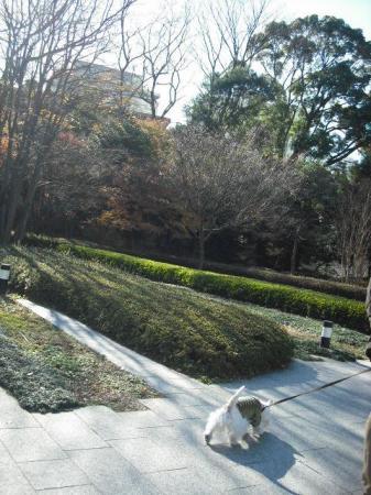 都会の庭園.JPG