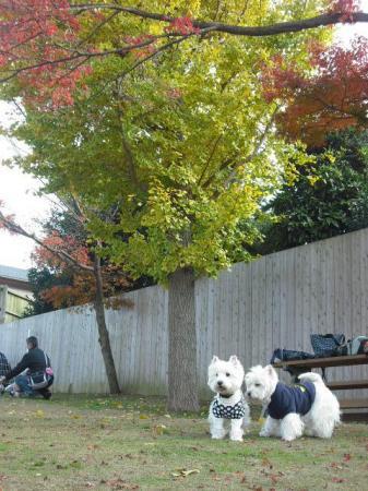 秋のユーカリ