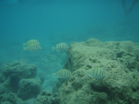 ハナウマベイ海の中1