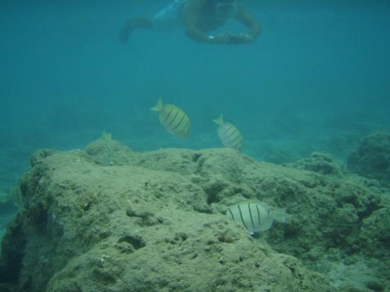 ハナウマベイ海の中2