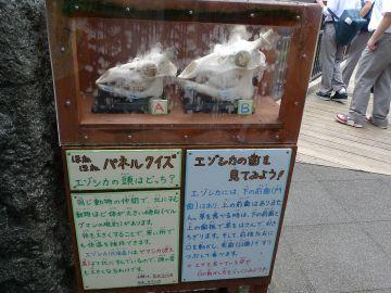 20110820_P1000945.jpg
