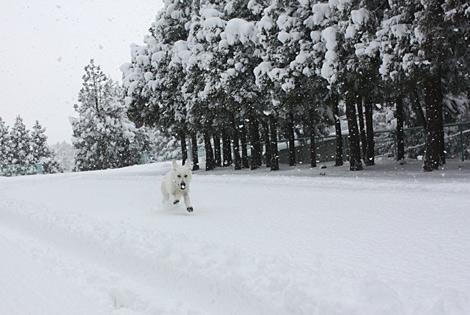 雪雪ふぉー!!