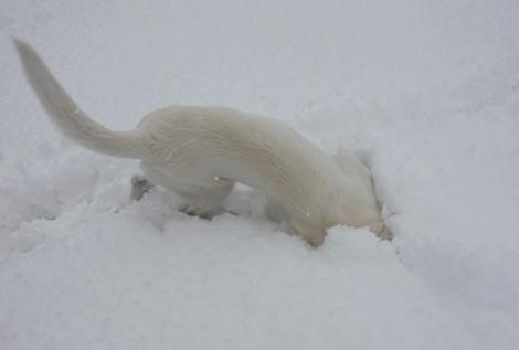 雪になりて~
