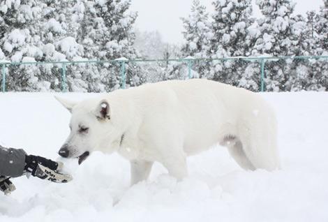 無条件に雪食う