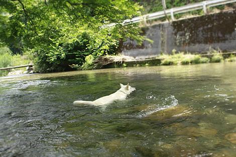 新たな泳法習得