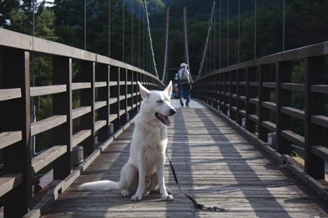 つり橋わたった