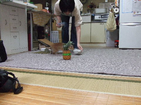 2010_06050085.jpg