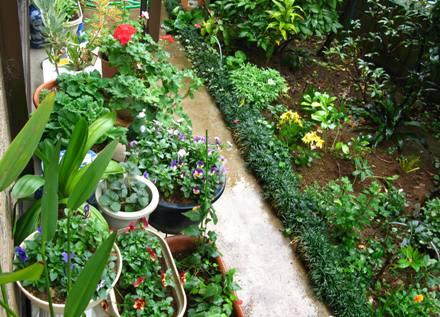 雨の軒下花壇