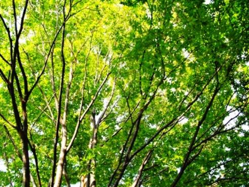 常緑樹ですね