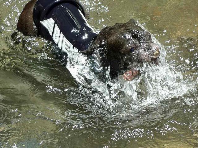 wet suit  (17)