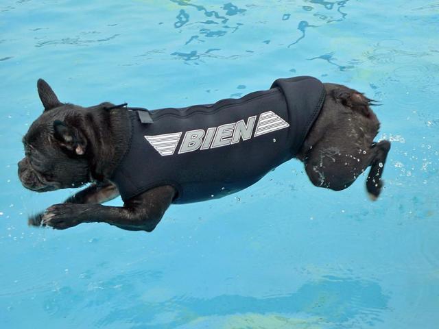 wet suit  (18)