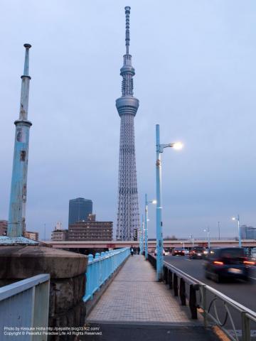 言問橋から見た東京スカイツリー