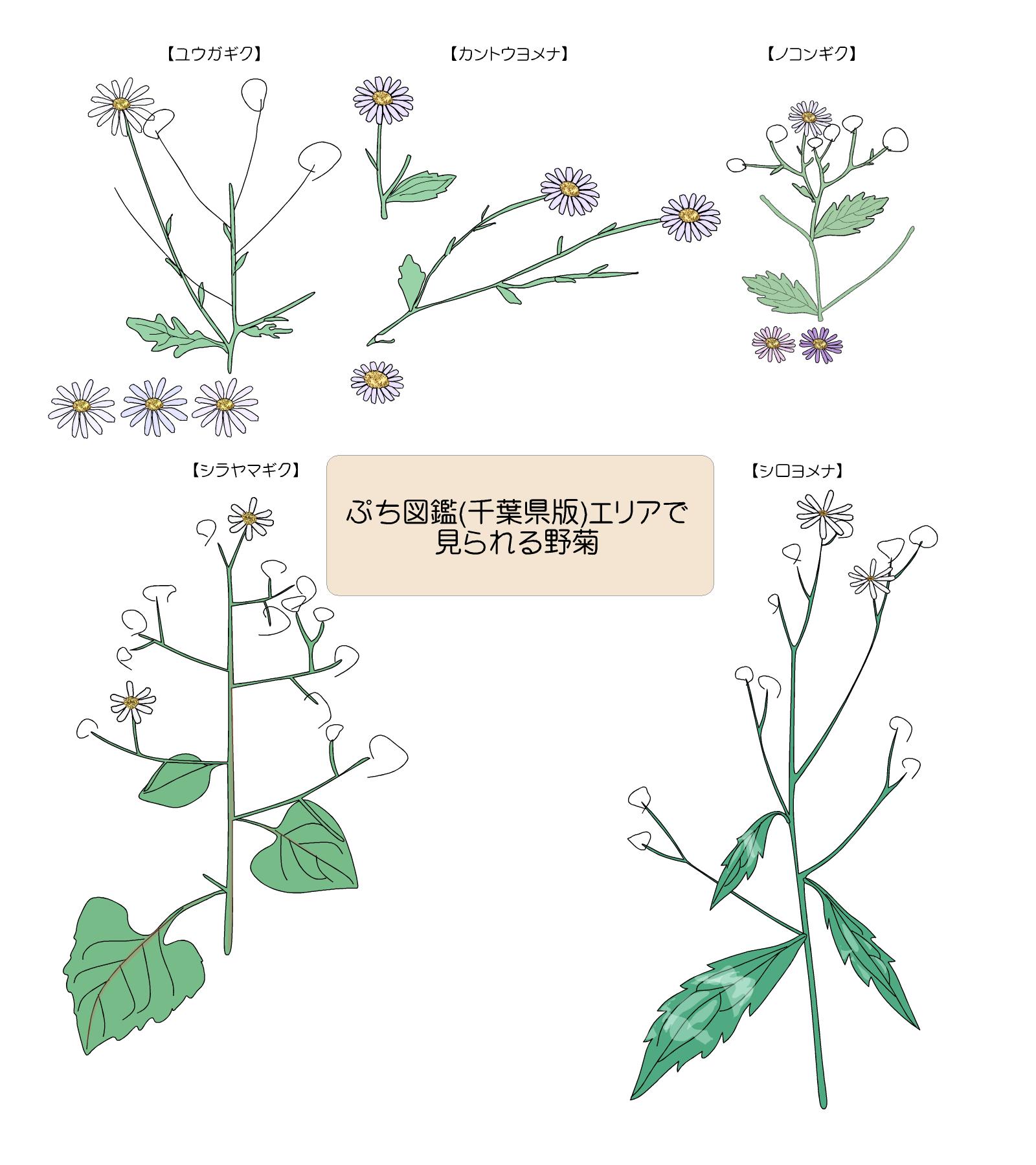 各種の花序周辺