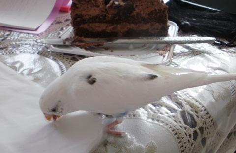 チョコケーキの残りかすを拾いルナ1