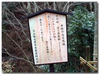 逆さ菩提樹-1-