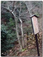 逆さ菩提樹-2-