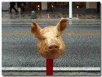 豚と一緒に一休み-2-
