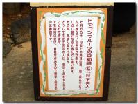 ドラゴンフルーツの豆知識-4-