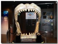 サメの歯-1-