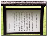 加藤清正公駒つなぎの桜-1-
