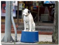ビクター犬 ニッパー-2-