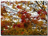 紅葉 黄葉-1-