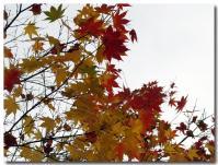 紅葉 黄葉-2-