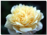 English Garden-1-