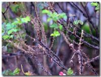 Wild Edric-1-