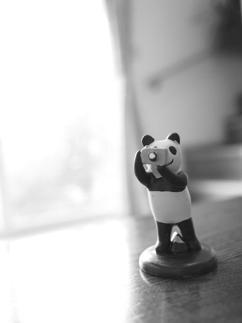 パンダのカメラマン