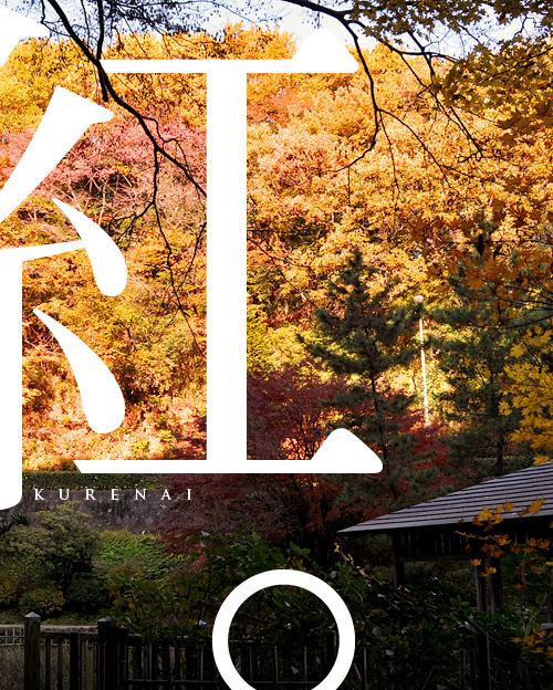kazu417_20101201233427.jpg